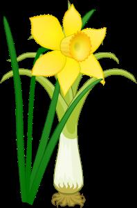 Daffodillleek